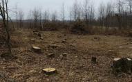 На Житомирщині заявили про багатомільйонні збитки через «чорних лісорубів»
