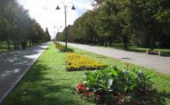У парках Луцька не збираються боротися з кліщами і комарами?