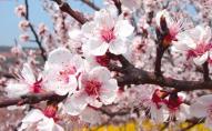Алергія на цвіт: як розпізнати та що робити