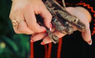 Може вбити людину: у Карпатах знайшли змію-мутанта. ВІДЕО