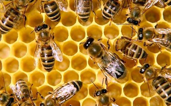 У Луцькій громаді масово травлять бджіл: міськрада проведе розслідування