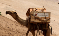 Бібліотека на верблюдах допомагає дітям на дистанційному навчанні. ФОТО