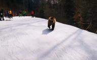 Лижний інструктор врятував групу туристів від «неагресивного» ведмедя. ВІДЕО