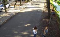 На очах у дітей: невідомий чоловік закидав камінням качку у Центральному парку Луцька. ВІДЕО
