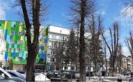 В Луцьку через неправильну обрізку можуть загинути дерева