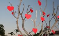 Стало відомо, скільки пар закоханих волинян вирішили одружитися 14 лютого