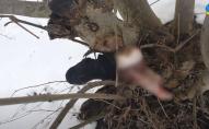 На Львівщині собаки притягнули на подвір'я людську ногу. ВІДЕО