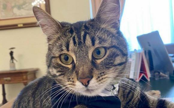 Можливо злякався вибухів: міський голова розшукує загубленого котика