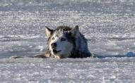 У Києві жінка, рятуючи собаку, провалилась під лід. ВІДЕО