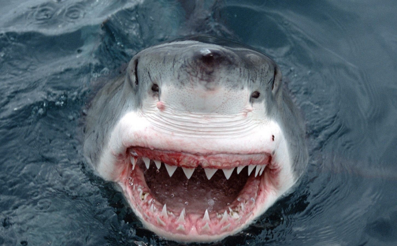 Акула напала на чоловіка, зламала зуб і втікла. ФОТО