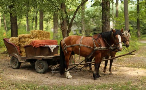 Краще за «Теслу»: на Рівненщині створили воза зі старого «Жигуля». ФОТО