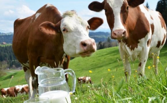 Господарство із Волині на вершині «ТОП-10 молочних ферм України»