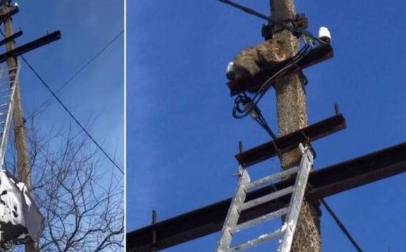 У Нововолинську кіт 24 години просидів на стовпі. ФОТО