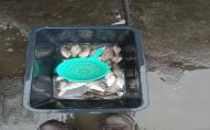 Волинський рибоохоронний патруль затримав 12 порушників закону