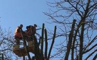 В Луцьку більше не будуть «по-варварськи» обрізати дерева