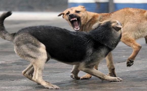 Лучани дедалі частіше скаржаться на бездомних псів