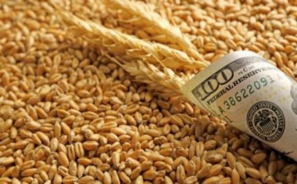 В Україні рекордно впали ціни на пшеницю