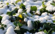Коли в Україну прийде «весняна» погода