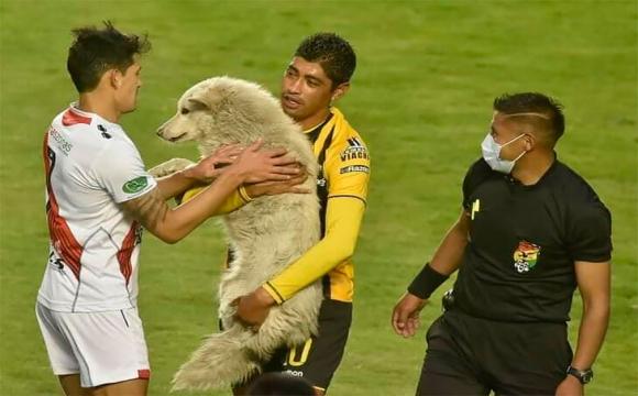 Футболіст урятував собаку, що потрапив під машину