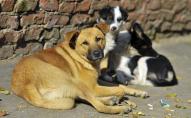 У Луцьку пропонують створити притулок для безпритульних собак