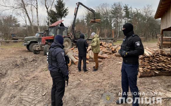 На Волині облава на незаконних лісорубів: працює КОРД. ВІДЕО