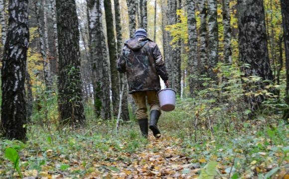 У лісі на Волині грибник натрапив на небезпечну знахідку