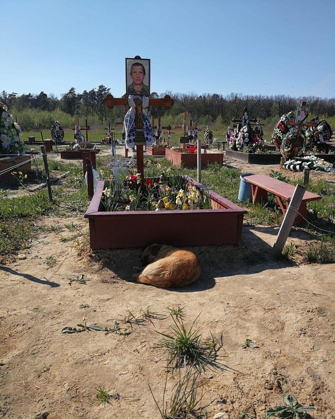 Український «Хатіко» цілий рік не відходить від могили господаря. ФОТО