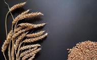 Українська пшениця почала дешевшати