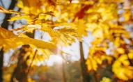 Прохолодніше ніж раніше: прогноз погоди у Луцьку на 24 жовтня