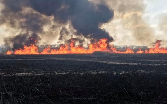 Муніципали погрожують волинянам штрафами до 21 250 грн за спалювання сухостою