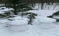 У волинському лісі знайшли «білі» гриби. ФОТО