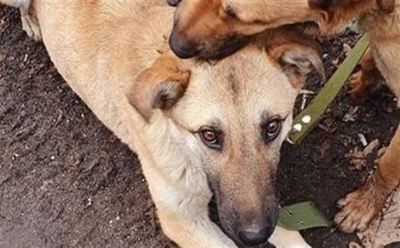 Багатодітну сім'ю підозрюють в поїданні собак. ВІДЕО