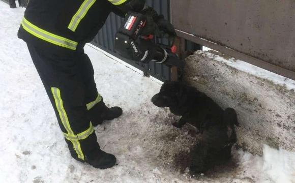 Волинські рятувальники звільнили з пастки собаку. ФОТО