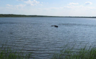 Цвинтар для тварин: на озері у Нововолинську масово гине риба. ФОТО