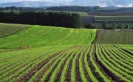 На Волині вже засіяли 22,8 тисячі гектарів