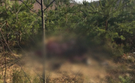 На Волині браконьєри застрелили червонокнижного лося