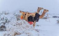 У Африці вдарили рекордні морози та випав сніг