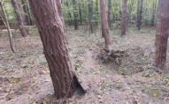 Шукав історичні цінності: рівнянин підірвався на артснаряді у лісі
