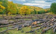 При заготівлі дров зі знайомим загинув волинянин