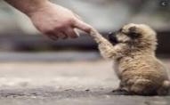 Лучанин врятував із крижаної води собаку