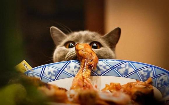 Нагодував чужого кота - штраф