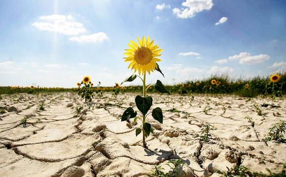 В Україні очікують аномальне літо-2021