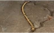 Золотий браслет жінки викрали... мурахи. ВІДЕО