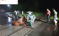 На Волині заради порятунку коня зупинили потяг. ФОТО