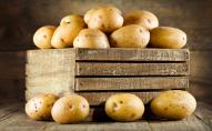 На Волині побудують завод із переробки картоплі