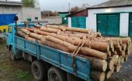 На Волині для крадіжки лісу наймають вантажівки. ФОТО