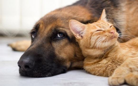 Коти такі ж розумні, як і собаки - вчені