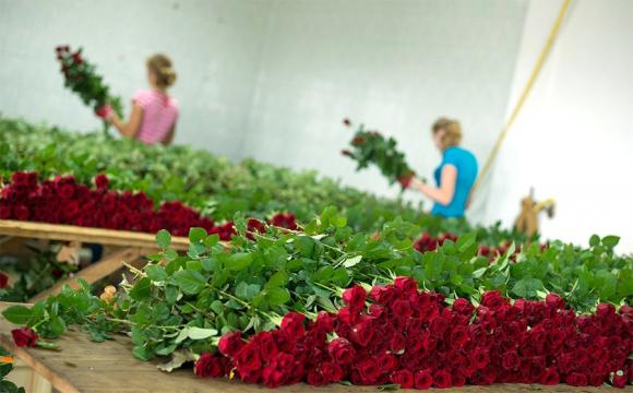 На 56% дорожче: в Україні ввели податок на квіти