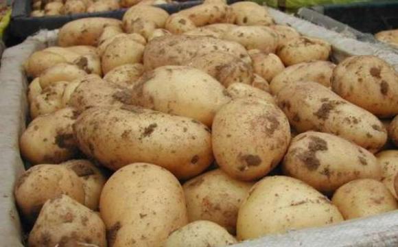 В Україні дорожчає картопля