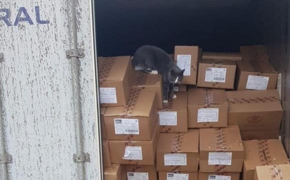 Кіт з України прожив на цукерках три тижні, добираючись до Ізраїлю. ФОТО